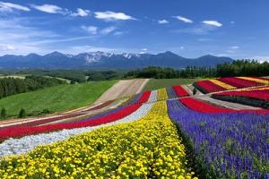色彩の丘3